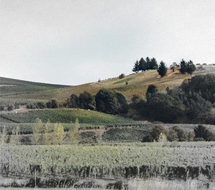 Vista wine